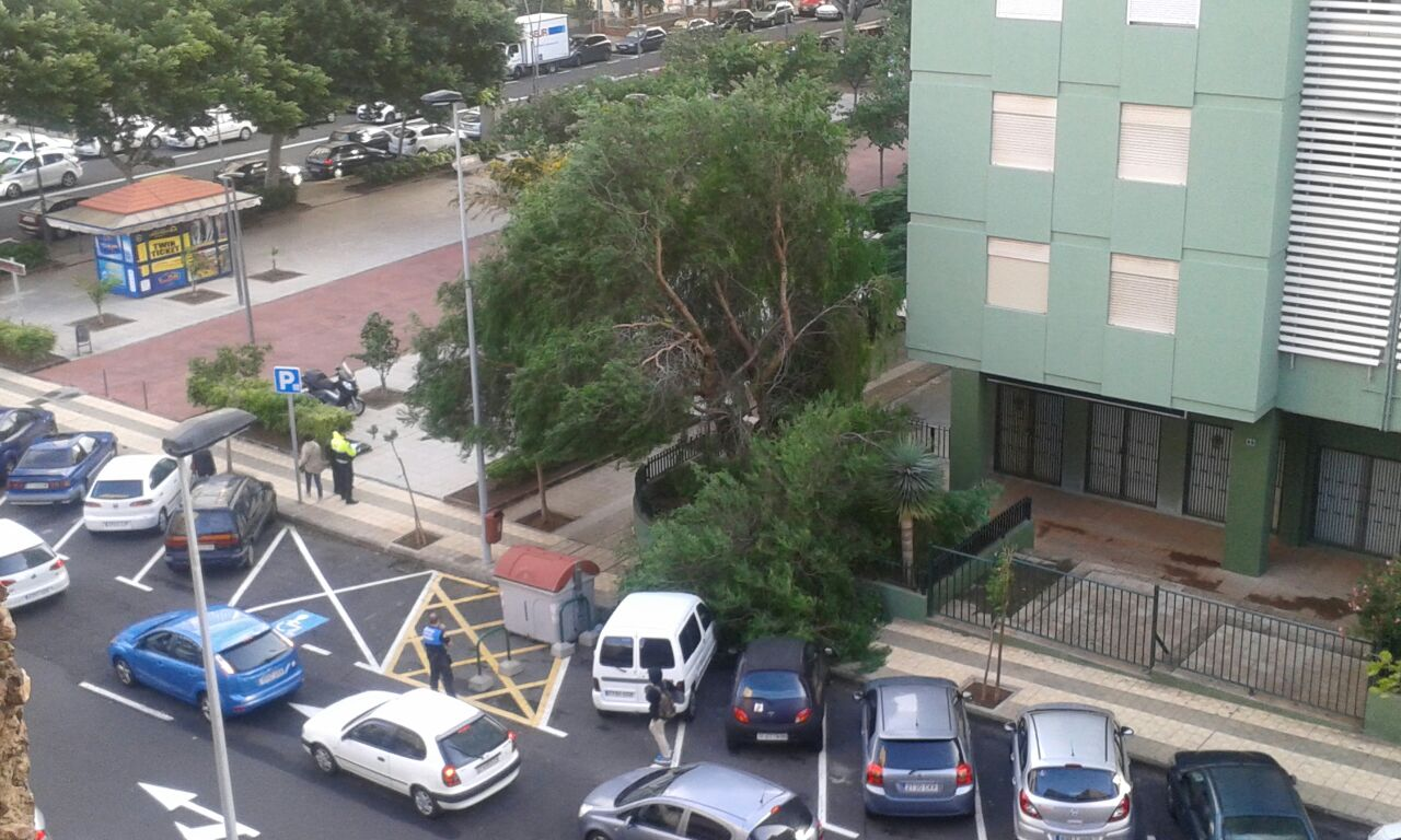 Un árbol cae sobre los vehículos en Tome Cano./ DA