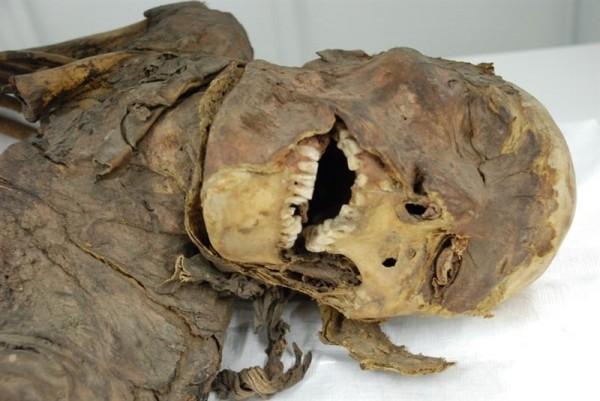 Estos ejemplares, junto con el resto de la colección, se pueden visitar en el Museo de la Naturaleza y el Hombre. / MNH