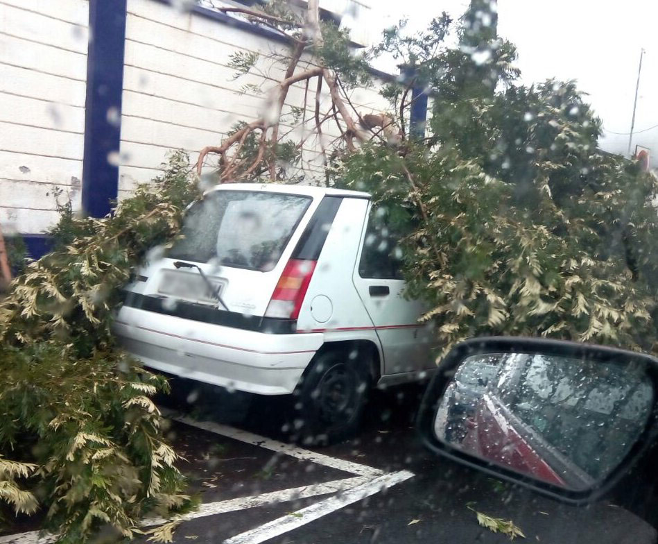La rama de un árbol cae en un vehículo en la recta del IES La Laguna (San Benito). / DA