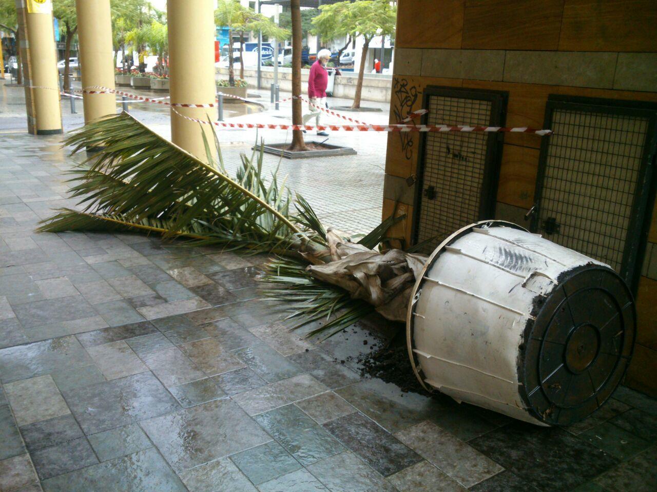 Macetas y otros objetos han caído por los fuertes vientos en el centro de Santa Cruz./ DA