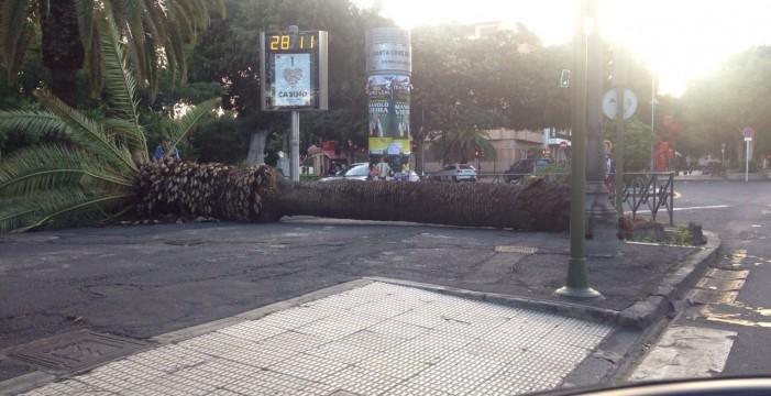 Los vientos intensos han generado casi un centenar de incidencias en Santa Cruz
