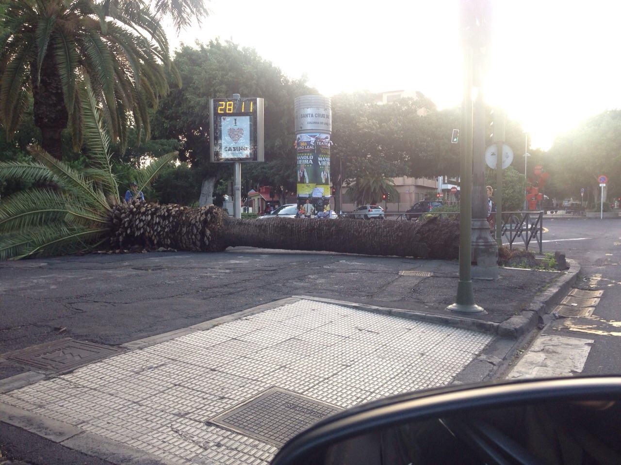 Otra imagen de la palmera caída en las Ramblas a la altura del Parque García Sanabria./ DA