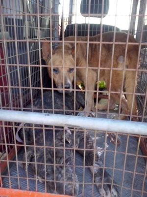 Los perros vivían entre las basuras acumuladas de la zona. / TWITTER POLICÍA LOCAL SC