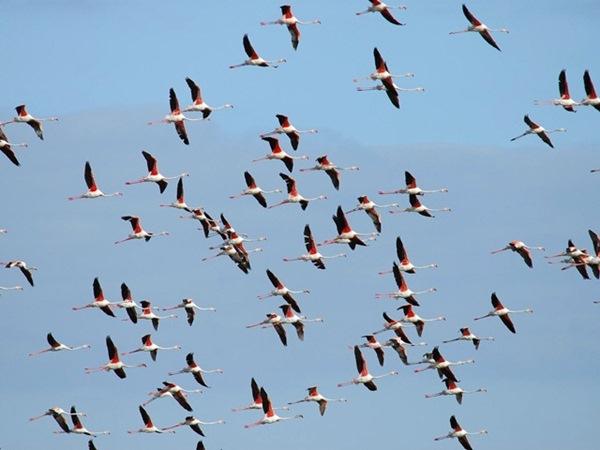 El proyecto analiza los efectos del cambio climático sobre las aves migratorias. / DA