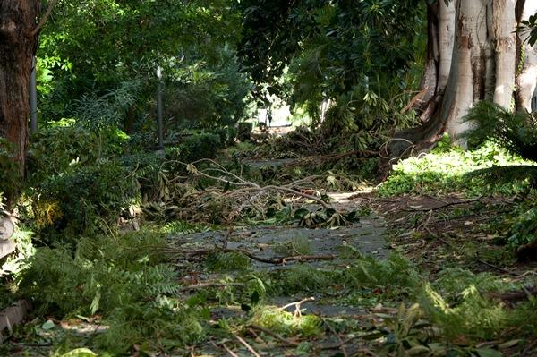 Los destrozos en el interior del parque fueron considerables y obligó a su cierre parcial. / FRAN PALLERO