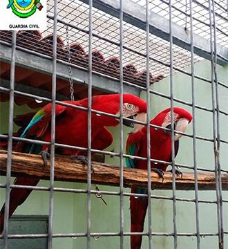 El Seprona interviene diversas aves protegidas en el norte de Tenerife valoradas en 8.000 euros