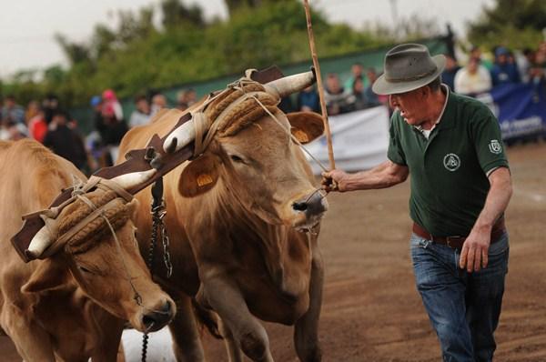 Imagen de la jornada de competición celebrada ayer en Tacoronte. / FRAN PALLERO