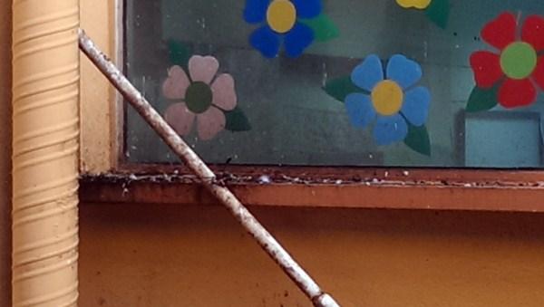 Las palomas dejan sus excrementos en un patio interior del colegio público San Fernando. / DA