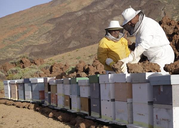 Las prácticas apícolas en el parque se realizan durante los meses de primavera y verano. / ÓSCAR MARTÍN