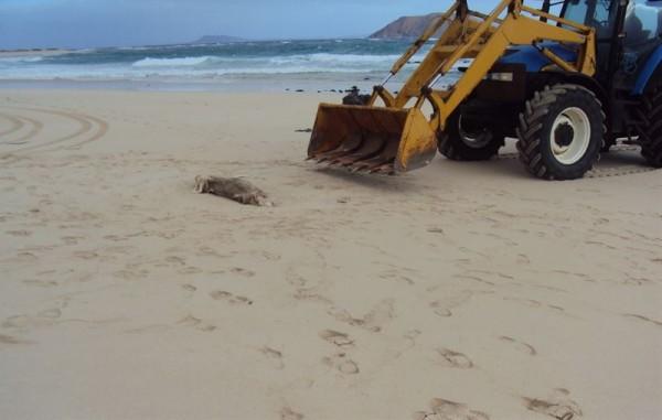 Grandes Playas de Corralejo (Fuerteventura).