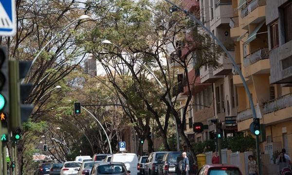 La tala de los árboles de Méndez Núñez comenzará en dos semanas
