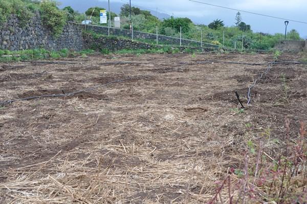 Los delincuentes dejaron la huerta, que estaba recién plantada de frutales, totalmente yerma. / DA