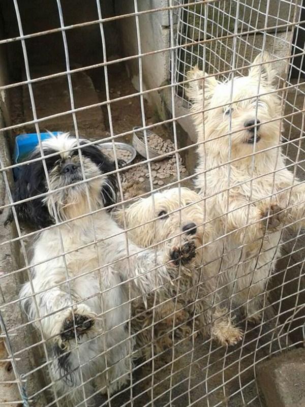 Algunos de los perros ahora puestos a salvo. / adepac canarias