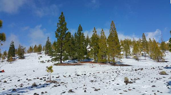 La primavera cubrió el Teide de nieve. | @YerayRGphoto