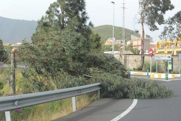 El viento alcanzó los 70 kilómetros por hora en el Valle de La Orotava. / S. M.
