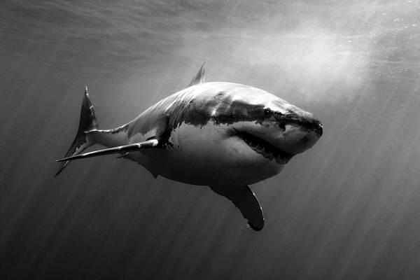 La moda y el mar, el hombre y la fauna, presentes en las imágenes del fotógrafo granadillero. | JUANMI ALEMANY