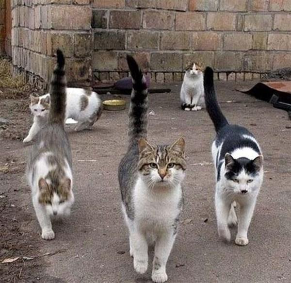 Candelaria quiere controlar los gatos callejeros. / DA