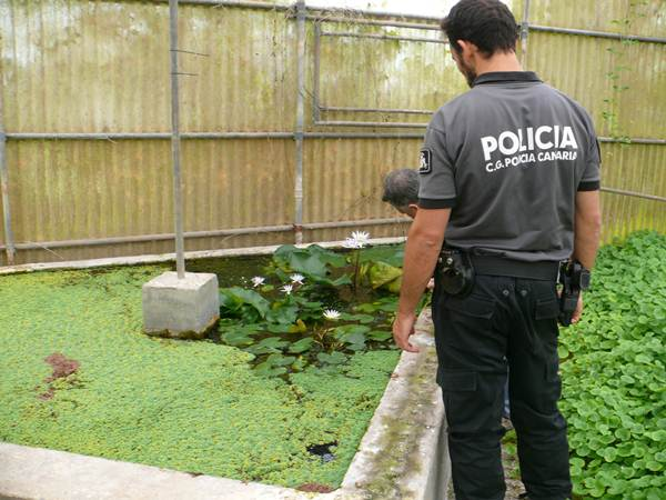 La Policía Canaria lleva a cabo inspecciones periódicas en los viveros y tiendas que venden plantas ornamentales. | DA