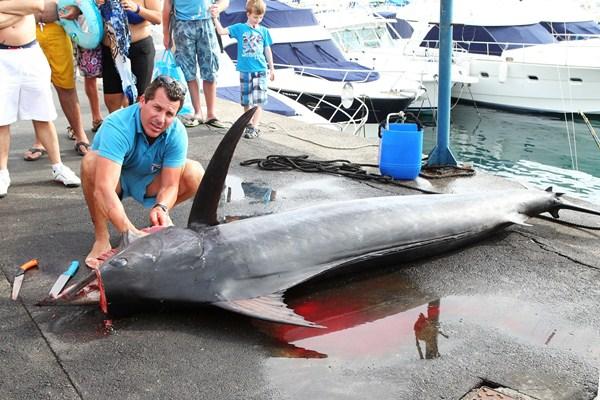 El marlín azul y sus captores en Puerto Colón ayer tarde. / Gerard Zenou