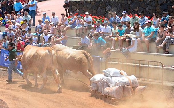 El público que acudió a la Casa de Carta vibró con el espectáculo del arrastre de ganado. / SERGIO MÉNDEZ
