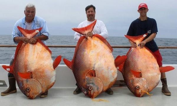 Tres pescadores con un opah cada uno. | NOAA