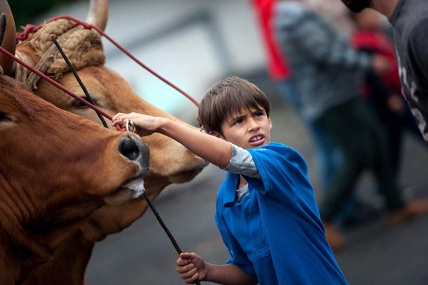 Guamas 06.06.15.- Prueba de arrastre de ganado infantil en Guamasa.
