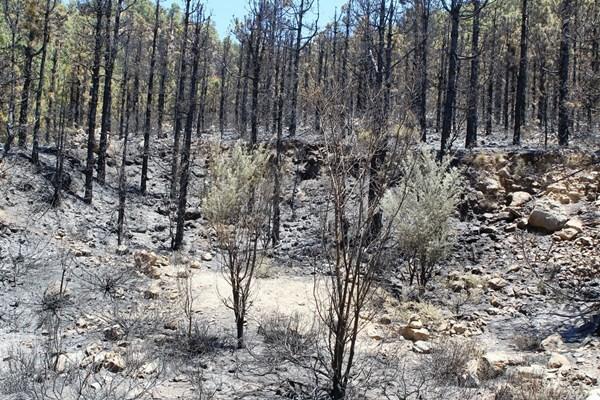 La superficie quemada es de aproximadamente 25 hectáreas. / G. Z.