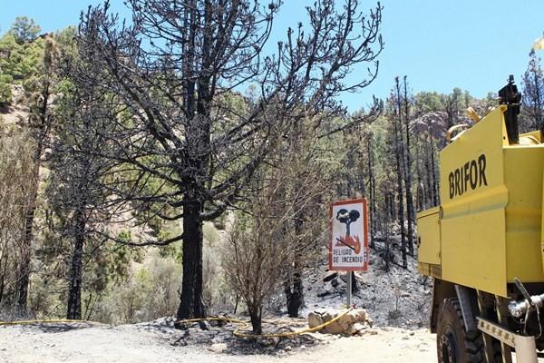 Pinos y matorrales, la vegetación afectada en este incendio. / GERARD ZENOU