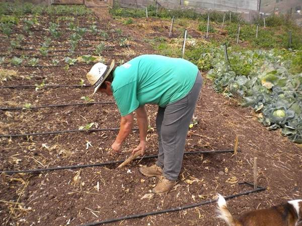 Foto de archivo de un agricultor. | EP