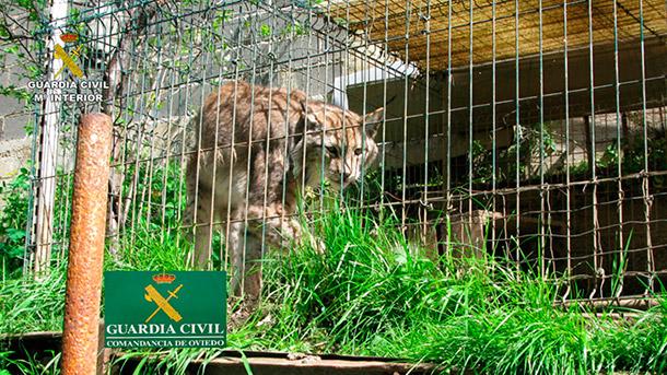 La Guardia Civil interviene 178 especímenes en una operación contra tráfico ilegal de animales