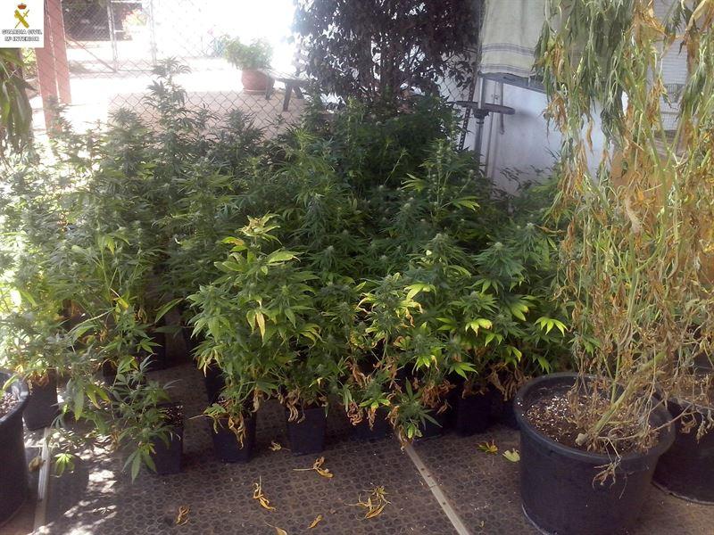 Marihuana El Rosario