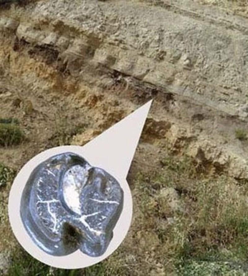 El análisis del fósil es clave para descubrir los orígenes. / MNCN - CSIC