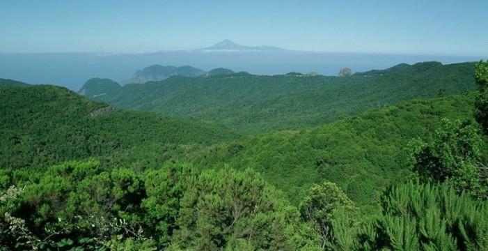 Actualizan los programas de recuperación de la flora amenazada del Garajonay