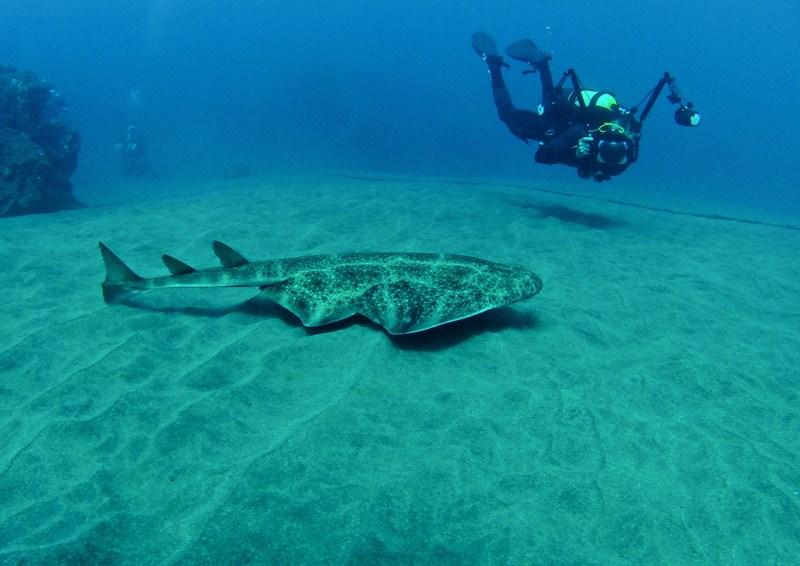 Esta especie, erradicada en el norte de Europa, se ubica en su mayoría en Canarias y el norte de África. / DA