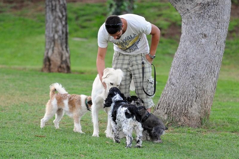 El parque para perros en La Granja es el más demandado por los dueños de mascotas en el centro. / S. M.