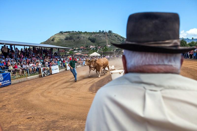 Arrastre de ganado en la Casa del Ganadero de La Laguna/Tony Cuadrado Freelancer