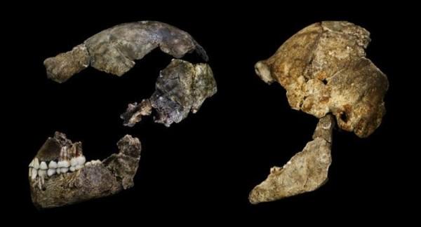 Restos del Homo Naledi. | WITS UNIVERSITY