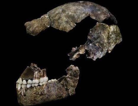 Homo naledi, un nuevo ancestro humano que enterraba a sus muertos