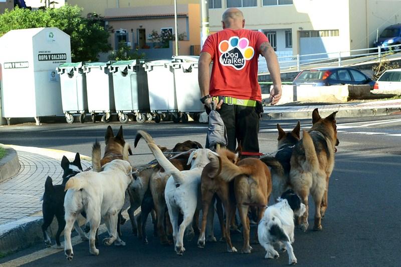 La presencia de paseadores de perros es una muestra de la elevada población de mascotas en Candelaria. / SERGIO MÉNDEZ