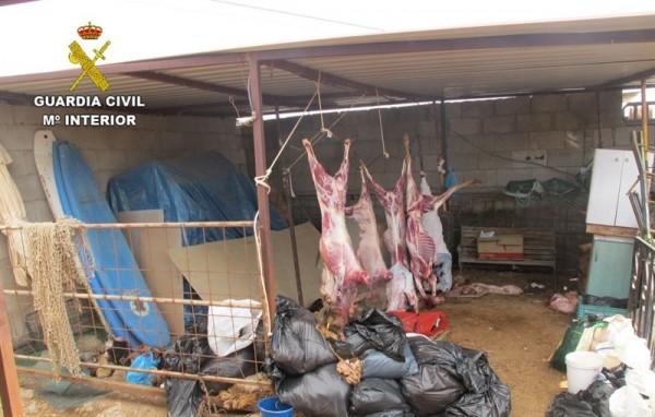 Imagen del matadero clandestino. | DA
