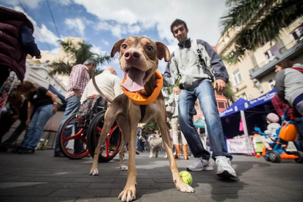 Las mascotas fueron las protagonistas de una jornada en la que todo fue                    organizado para su disfrute.  | ANDRÉS GUTIÉRREZ