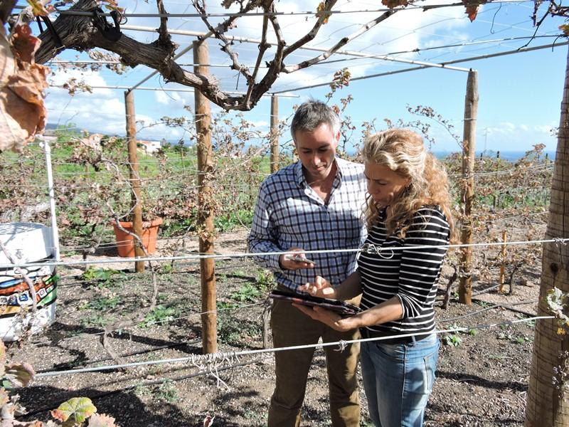Jorge Zerolo y María Alonso suben datos sobre el estado de una vid en Güímar, que trasladan a la aplicación que han creado para toda la comunidad agrícola. / NORCHI