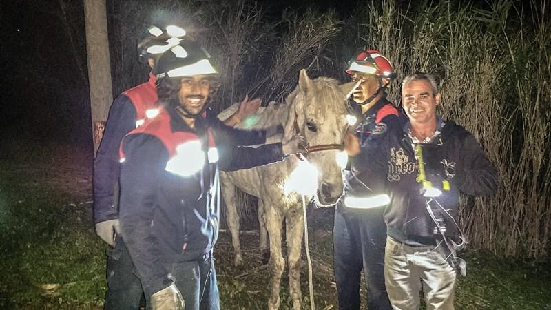 rescate caballo