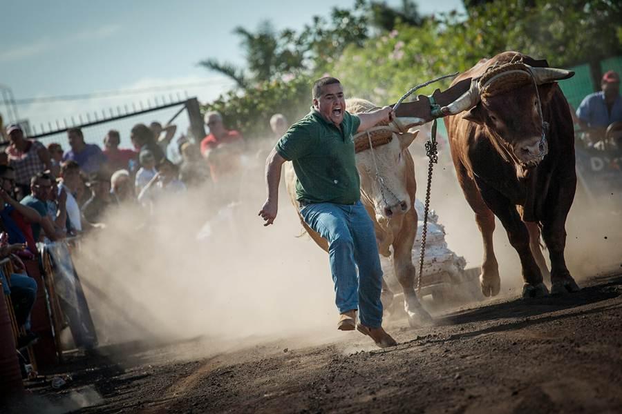 El aparcamiento del Mercadillo del Agricultor de Tacoronte fue el escenario de la primera jornada  de la temporada.  | ANDRÉS GUTIÉRREZ