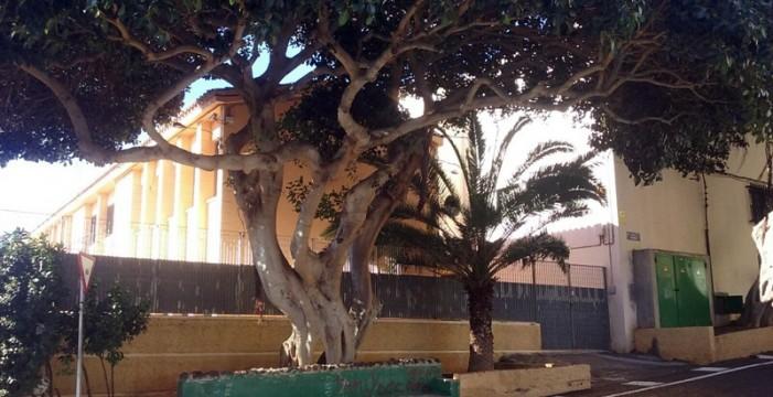 Advierten del peligro de varios árboles en mal estado en Santa María del Mar