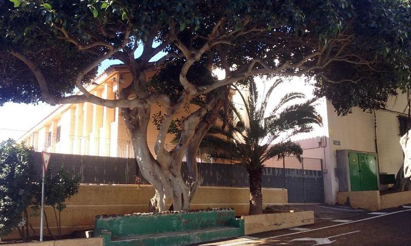 El último incidente tuvo lugar al caer una rama sobre un joven que estaba sentado en uno de los bancos. / DA