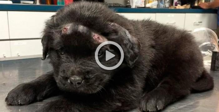Un cachorro sobrevive tras recibir 18 disparos