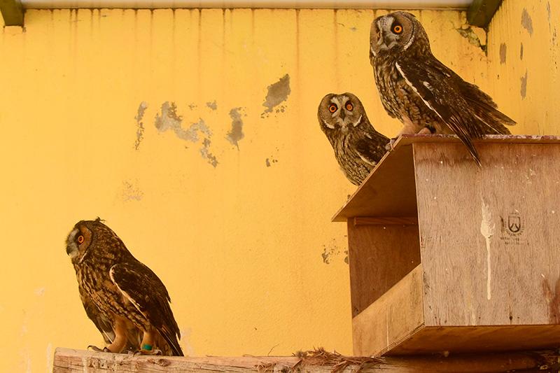 centro recuperacion aves La Tahonilla 1