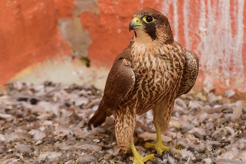 centro recuperacion aves La Tahonilla 7