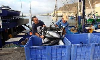 Canarias podrá capturar 40 toneladas más de atún rojo, muy lejos de las 570 pedidas